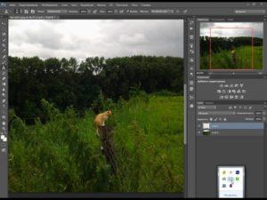 Как вырезать любые объекты в Adobe Photoshop?